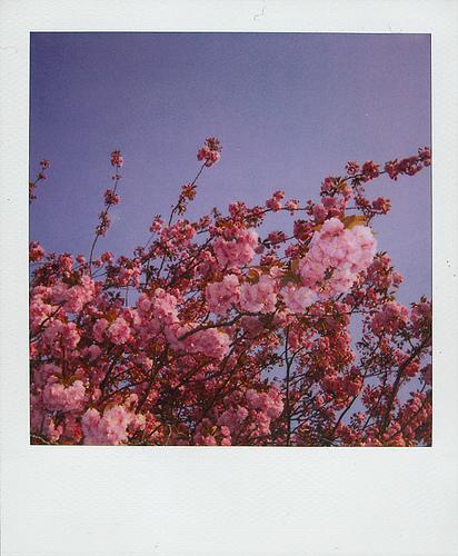Polaroid8