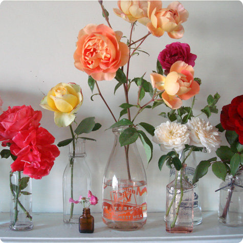 Rosesmain