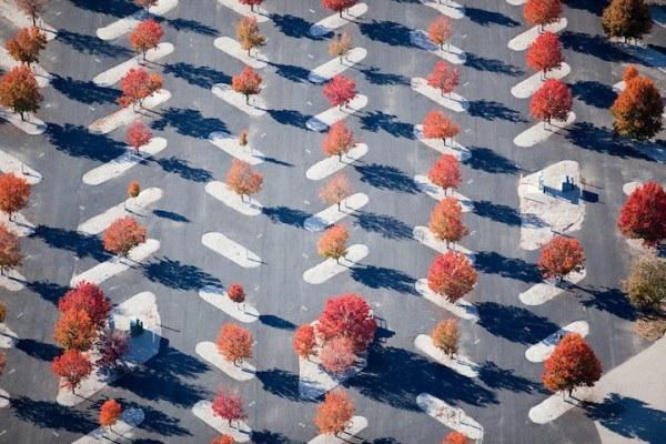 Alex maclean patterns2